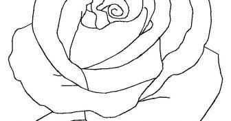 Картинки розы карандашом для срисовки (28 фото)