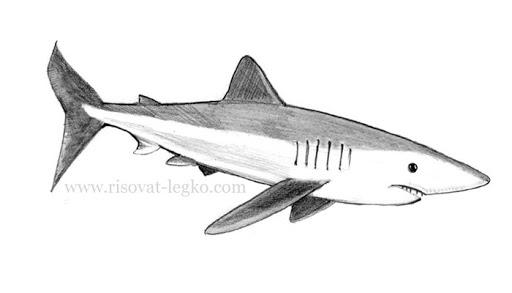 Рисунки акулы карандашом для детей (22 фото) 🔥 Прикольные ...