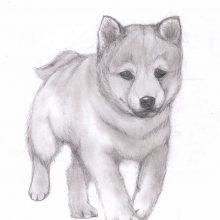 Рисунки для срисовки милых животных (28 фото)