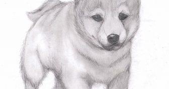 Рисунки карандашом собаки для начинающих (31 фото)