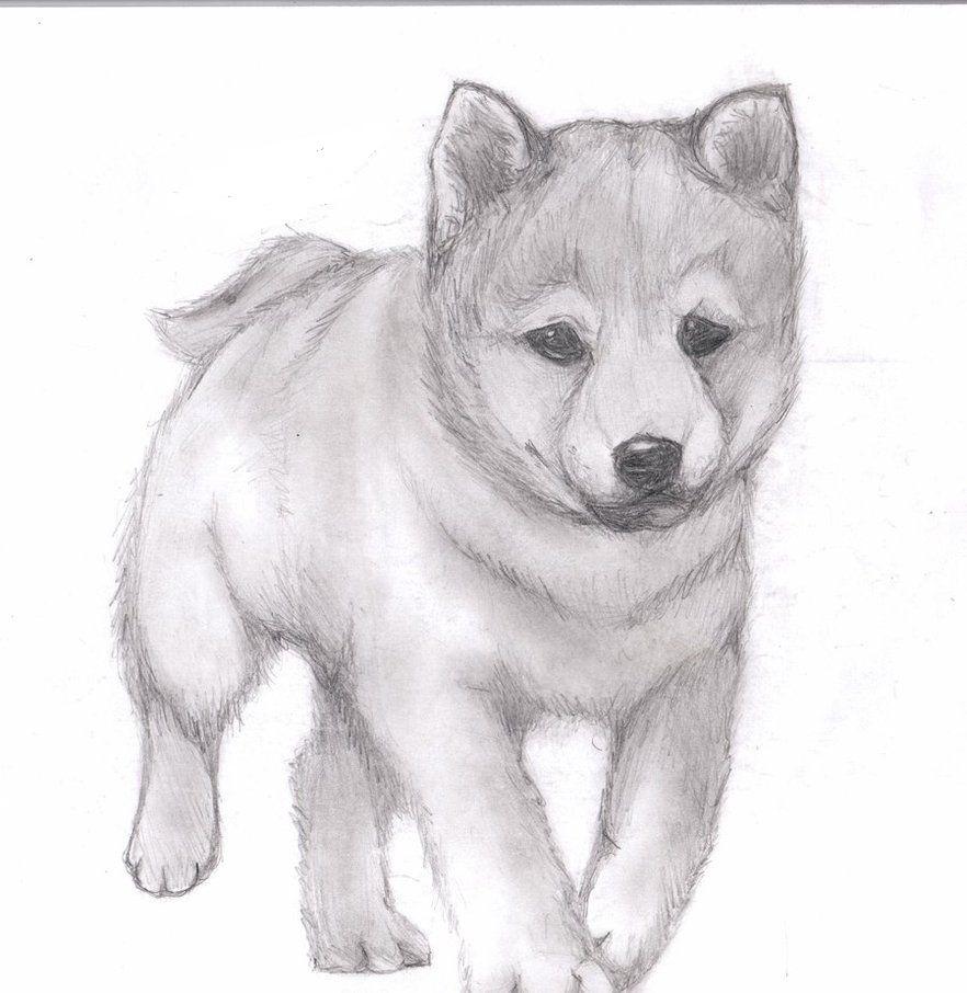 лента рисунки карандашом не сложные но красивые собаки стиле лофт должен