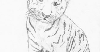 Рисунки тигра карандашом для срисовки (23 фото)