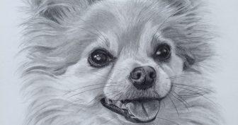 Рисунки карандашом морда собаки (27 фото)