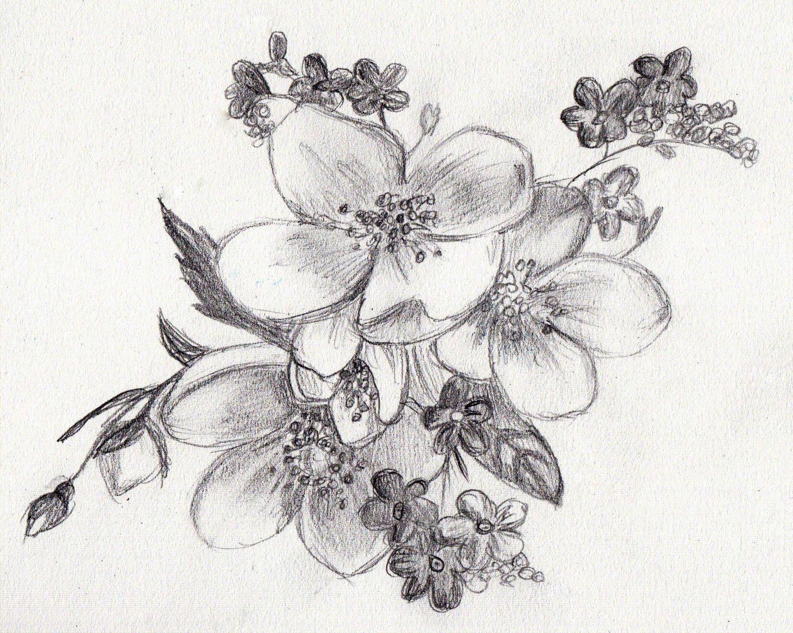 drawings of flowers - HD1024×819