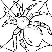 Картинки пауков для срисовки для детей (24 фото)