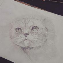 Рисунки карандашом пушистый кот (26 фото)