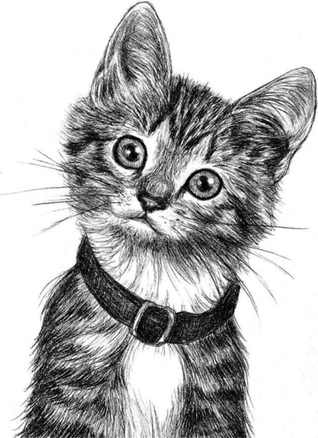 Рисунки карандашом пушистый кот (26 фото) 🔥 Прикольные ...