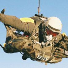 Псы служащие в армии
