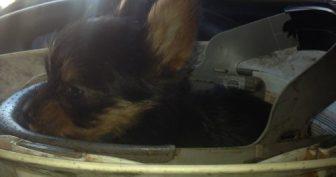 Фотографии забавных собак (48 фото)