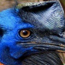 Опасные животные, которые выглядят обманчиво очаровательно