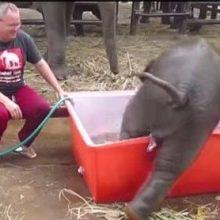Купающийся в ванне слонёнок взорвал интернет