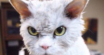 Альберт – вот самый суровый кот в мире