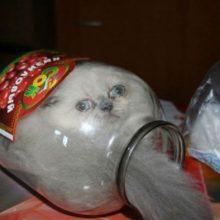 Кошки, которые умеют помещаться в невероятные вещи