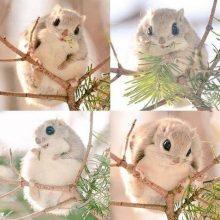 Одно из самых милых существ на планете