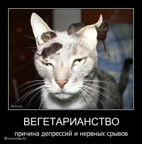 1284704416_demotivatory_27