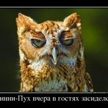 Смешные картинки с добрым утром! (16 фото)