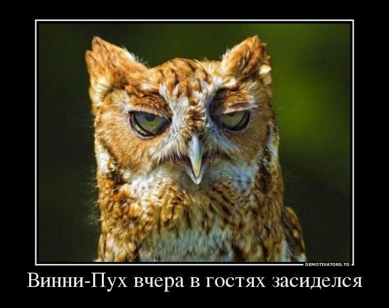 сова фото голова