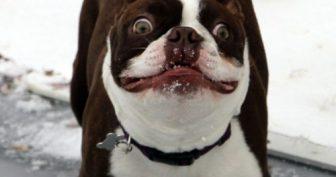 Прикольные фото собак. (13 фото)