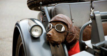 Very cool Gromit Wallpapers HD 1280x720