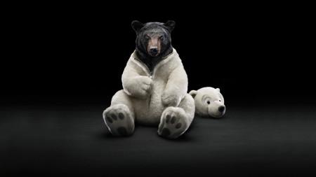 bear-wallpaper-1366x768