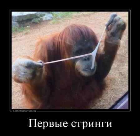 demotivatorium_ru_pervie_stringi_71201