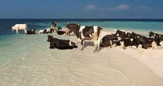Прикольное фото на пляже. (13 фото)