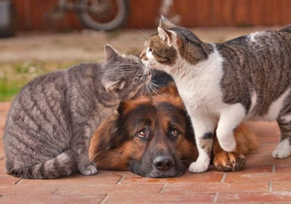00-1c-dog-and-cat-10-08-12