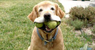 Прикольные фото про собак. (15 фото)