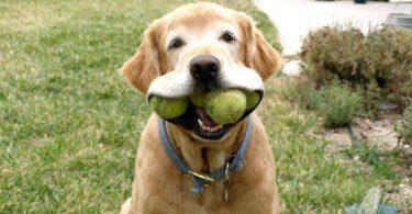 3feffb10a3cb367f625771d1b382972fmouthful-of-balls