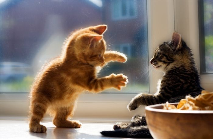 Funny-cute-kittens-part2-61