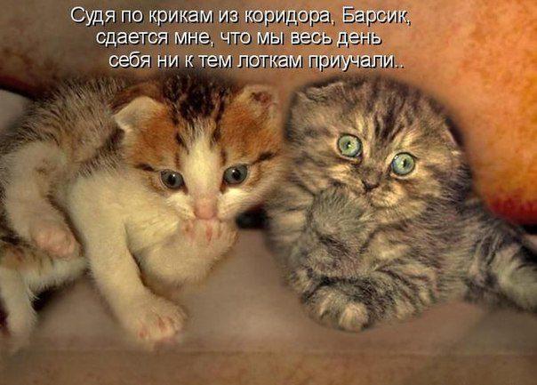 http://bipbap.ru/wp-content/uploads/2015/12/Xrl0gHf-b0s.jpg