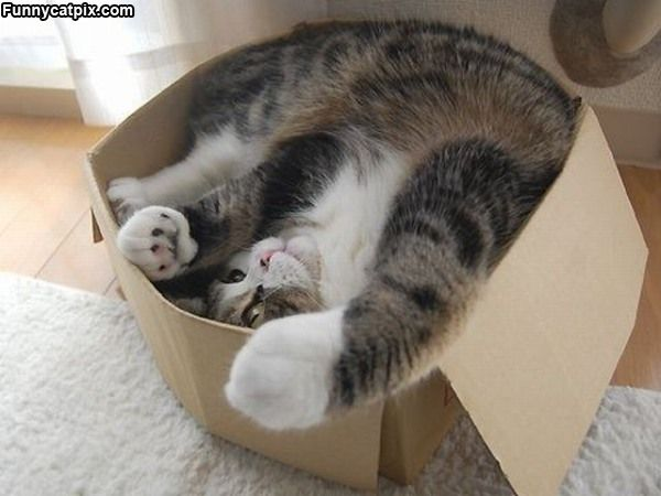 cat-fun-i-love-boxes