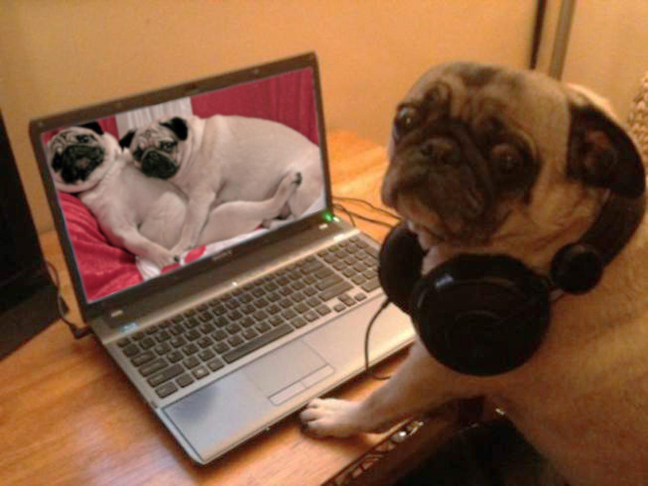 http://bipbap.ru/wp-content/uploads/2015/12/full-6351-34150-pug.jpg