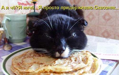 smeshnie_koti_2