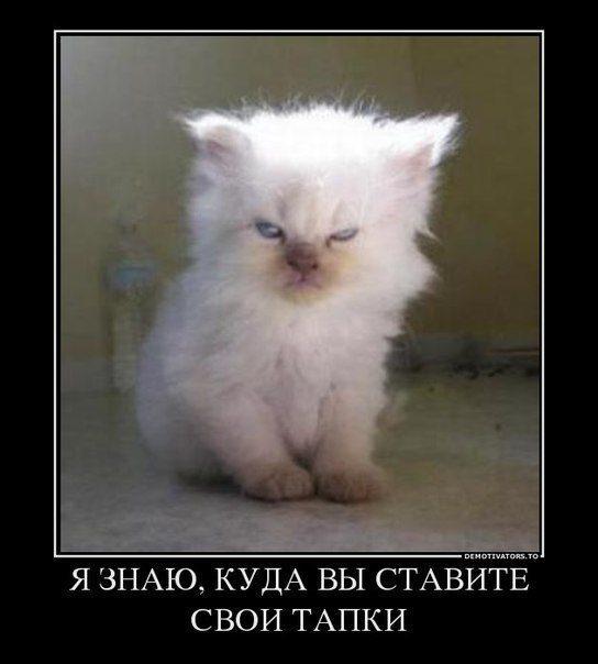 tapki-kitten