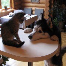 Фото кошек и собак прикольные. (14 фото)