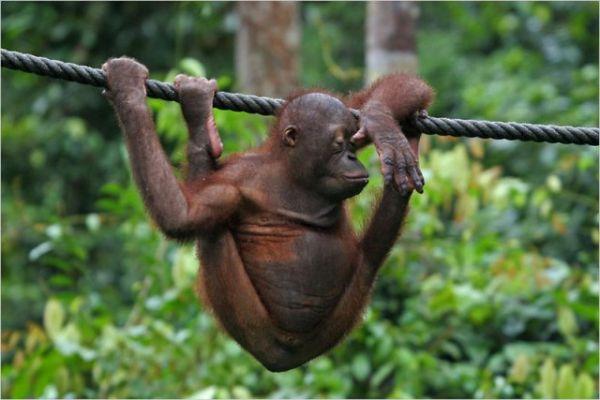 1190923096_monkey_02
