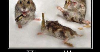 Смешные картинки про пятницу. (11 фото)