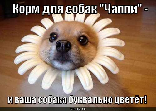 97176032_kormdlyasobakchappi_1323931899