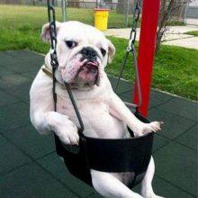 Cмешные картинки про собак. (11 фото)