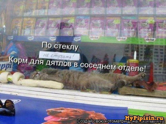 mypipisin.ru_14277982231