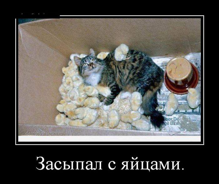 prikolnie_demotivatori_3