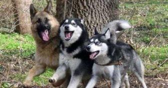 Прикольные фото собак. (12 фото)