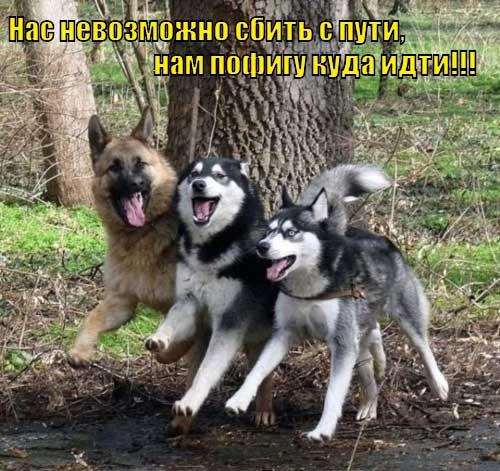 prikoly_pro_sobak_11