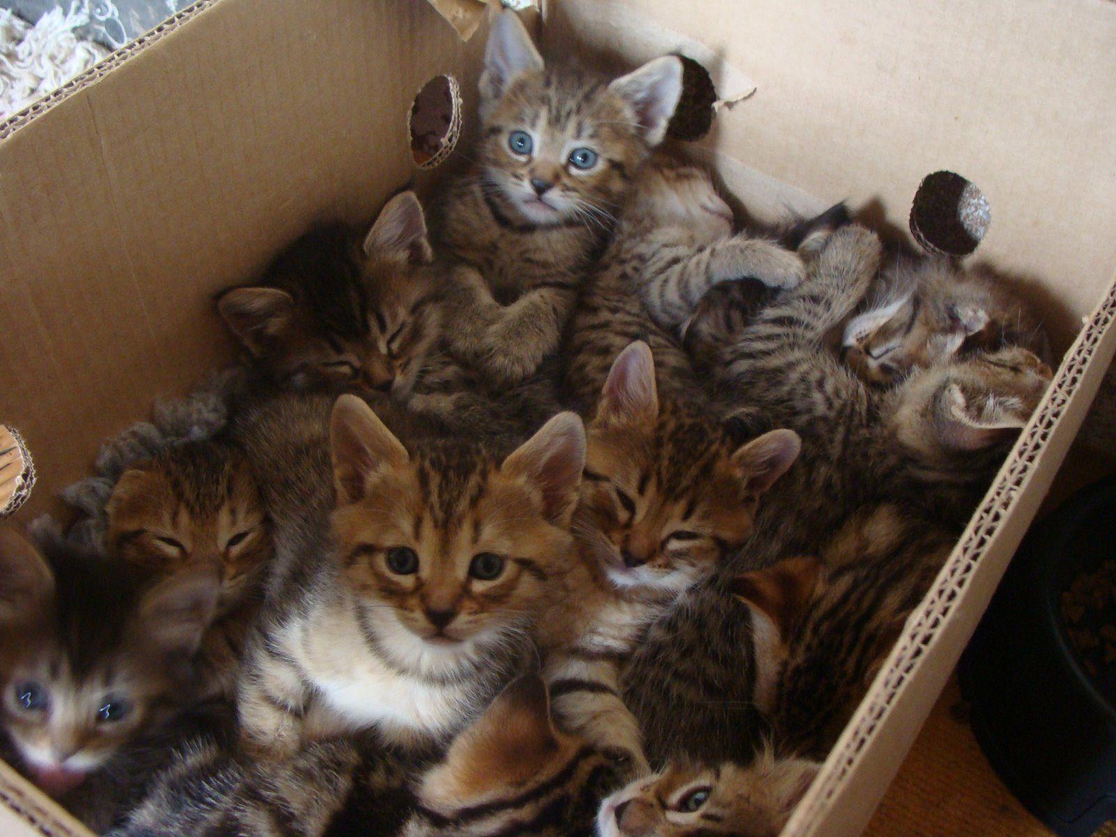 your-kitten-mega-pack-has-arrived