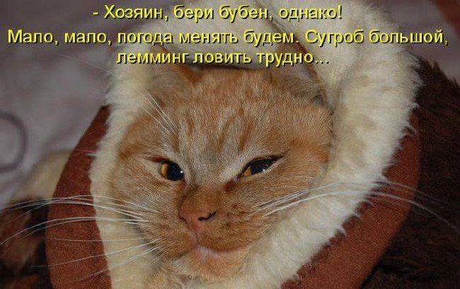 Картинки с кошками на телефон