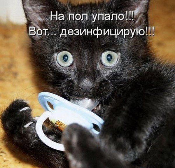 funny-kitten-soska