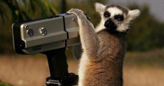 Животные и фотоаппарат. (11 фото)