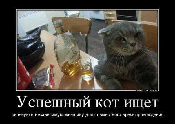Прикол с котом и девушкой