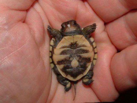 прикольные черепахи картинки